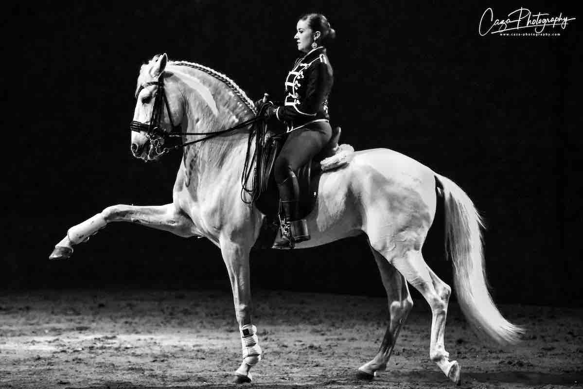 Stages dressage classique hasta luego nimes
