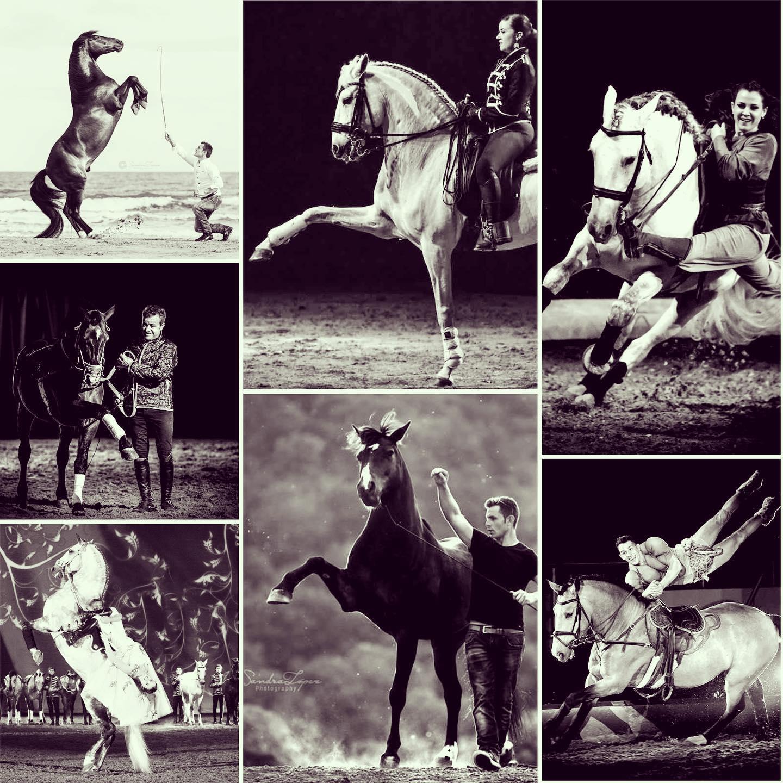 Stages équitation hasta luego nîmes dressage voltige liberté